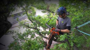 man with chainsaw harnessed into a tree